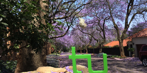 TU Logoin front of a street in Johannesburg in the flowering time of the Jacaranda-tree